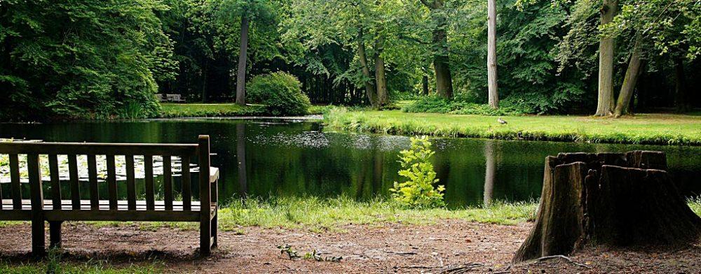 Tranquil Water Garden